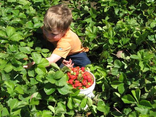 Jacob picking 2