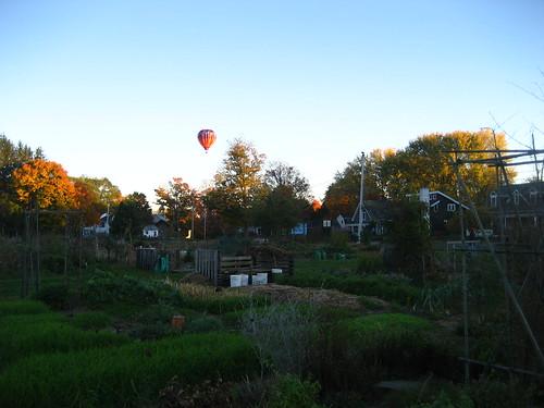 Hot air balloon above the Nton Community Gardens