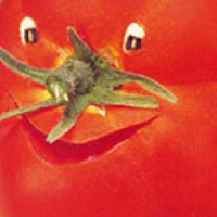 resampled_tomato