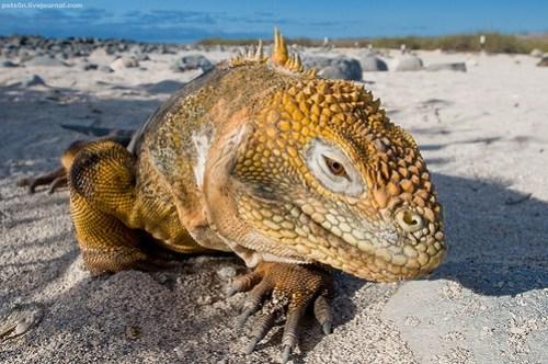Visiones de Galápagos