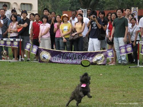 DogathonUPM200845