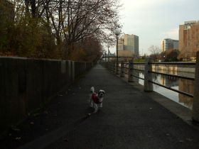 wembley path