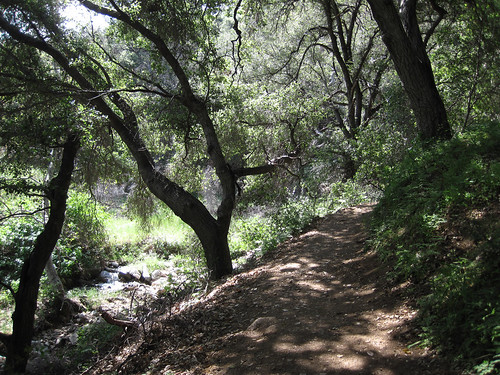 Placerita Canyon - Waterfall - 04
