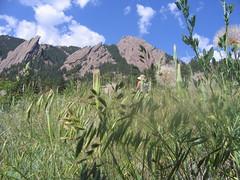 Boulder flatirons Chautauqua Park