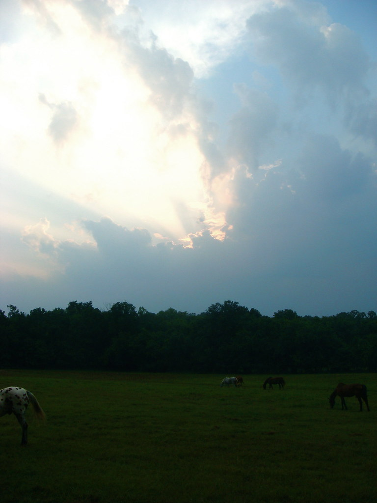 Beautiful Horse Sunset