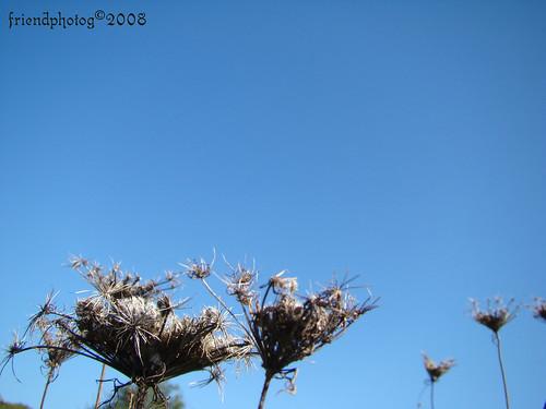 Weeds 2 - sig