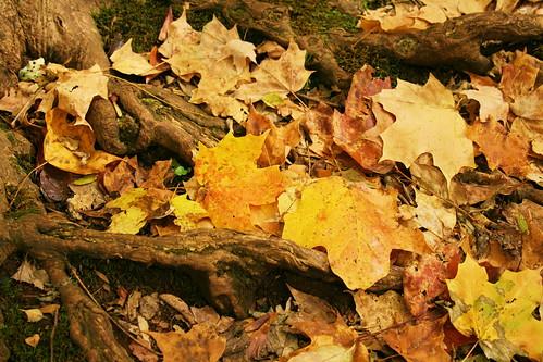 Fall ground