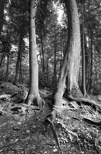 Eerie Trees,Smokies