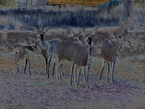 Psychedelic deer family