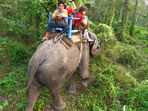 ElephantSafariButt