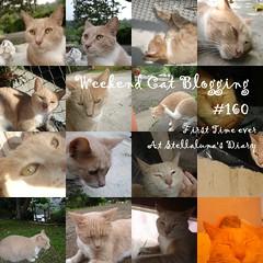 Weekend cat bloggin' #160