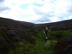 Mini Heather Valley