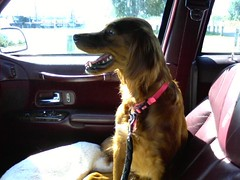 DANNI is ready to go meet her forever family