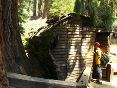 Tharp Log, la maison-tronc