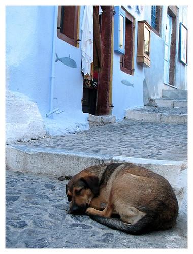A lazy dog by you.