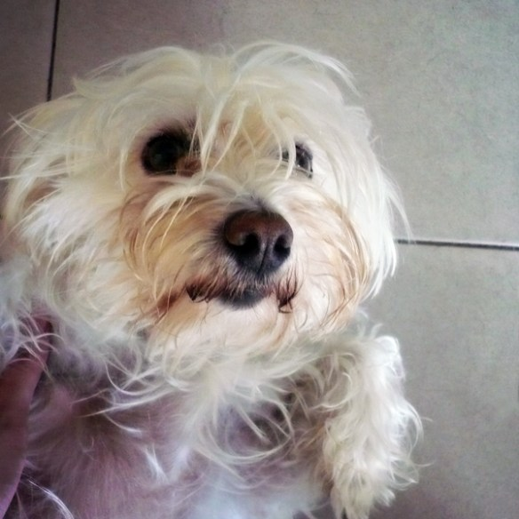 #4 - Bianca, the dog