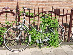 A forgotten bicycle in Amsterdam