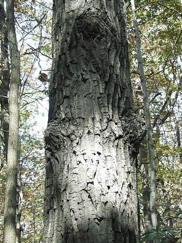 goddess tree 2