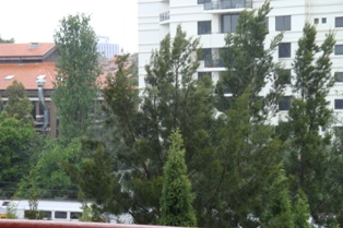 Rain n Train