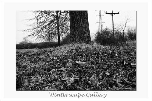 Winterscape3