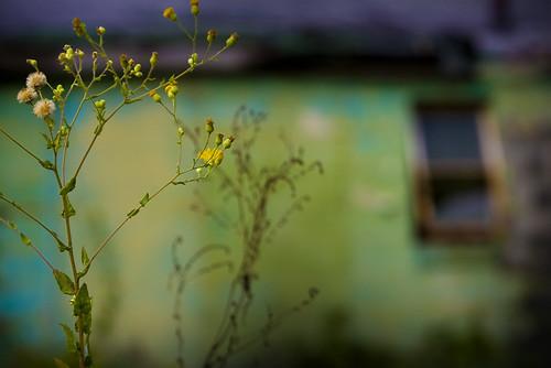 Floral Desolation Right