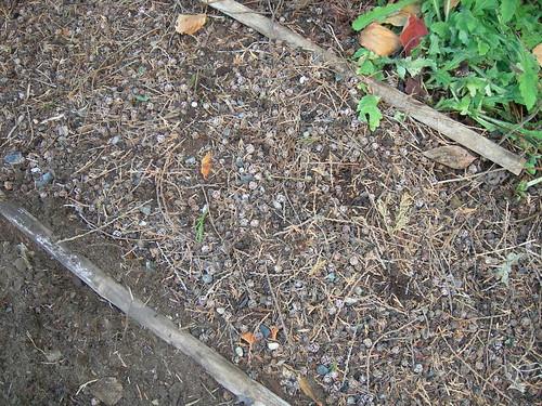 Cedar debris added