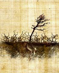Sower - Thorns