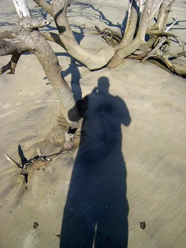 Gnarley Shadow