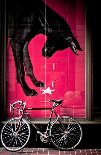 Dog & Cat & Bike