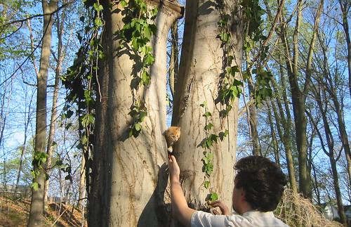 20080417 - Oranjello in our yard - 154-5443 - Oranjello & Clint - tree