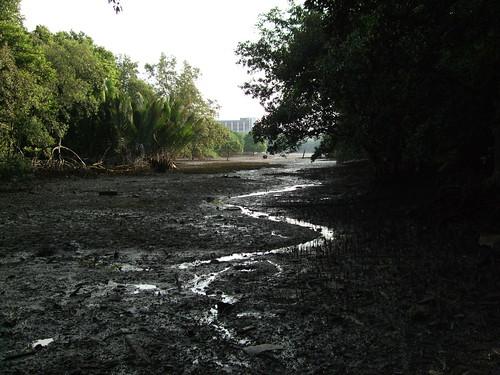 Pandan Mangroves