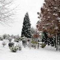 Roubaix sous la neige