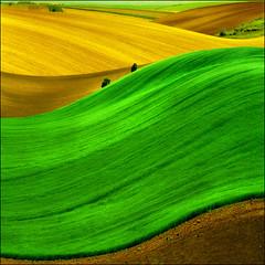 Pannonian Sea of Green, Serbia