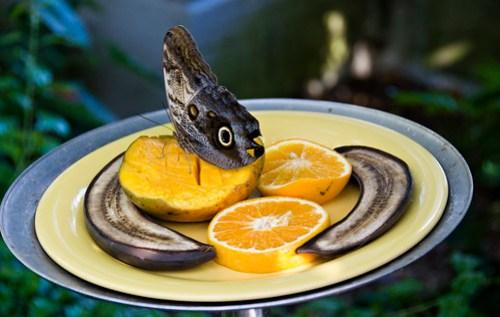 Mango, Orange, Plantains, Oh My!