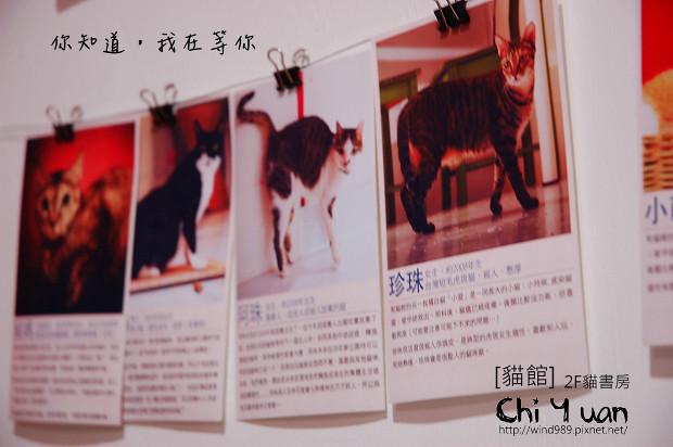 貓書房13.jpg