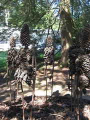 Pine People