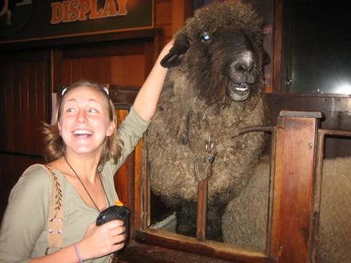 sheep in NZ #3