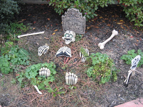 Grave and bones