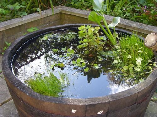 Barrel Pond Muswellhillbilly