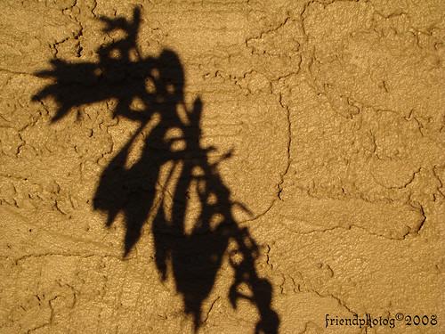Shadows Cast