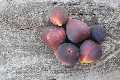 Fig Harvest