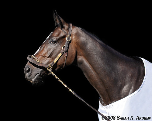 Horse of the Year?