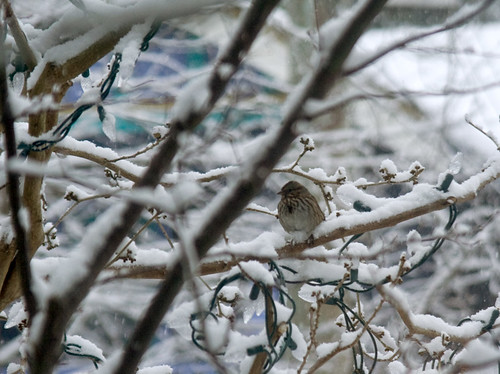 Little bird in the snow