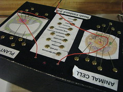 Cell Organelle Detector