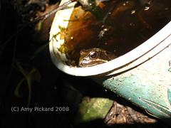 frog tub 1