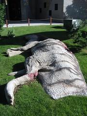 Dinosaur Park (15)