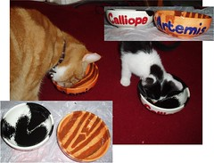Bowls for the cats