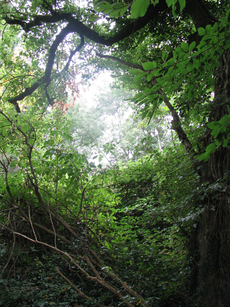 A tangled bank, near Sandwalk, Darwin's walking path near his home at Downe House - image by GrrlScientist