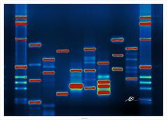 Micah's DNA