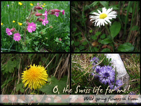 More wild spring flowers in bloom!